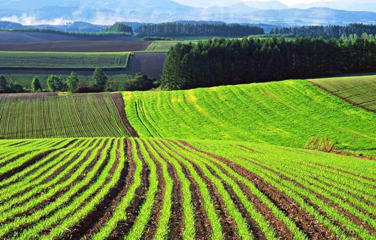 Виды разрешенного использования земель сельскохозяйственного назначения в 2019 году